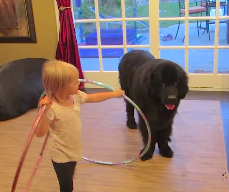 Cuteness Break: Adorable toddler tries to teach her dog to hula hoop