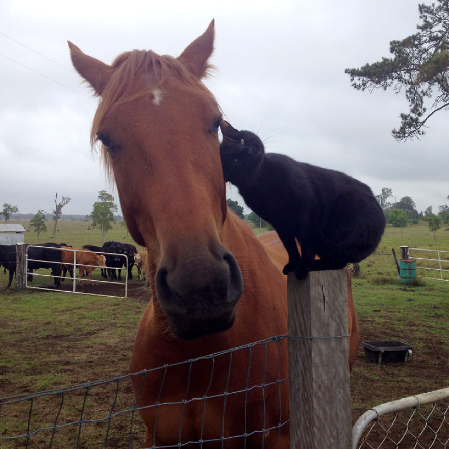 Animal besties: This horse and this cat are inseperable