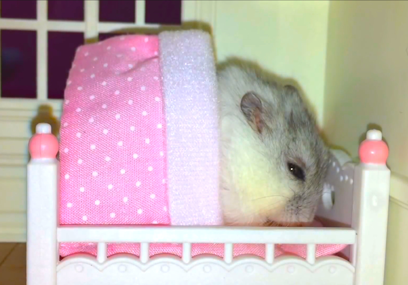 This tiny hamster goes to sleep only if she's tucked in and massaged first (because obviously)