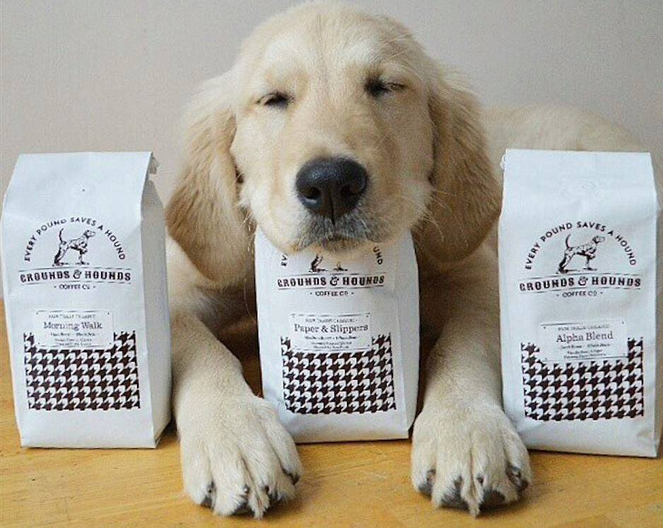 Are you ready for a dog café? Because we are TOTALLY ready for a dog café