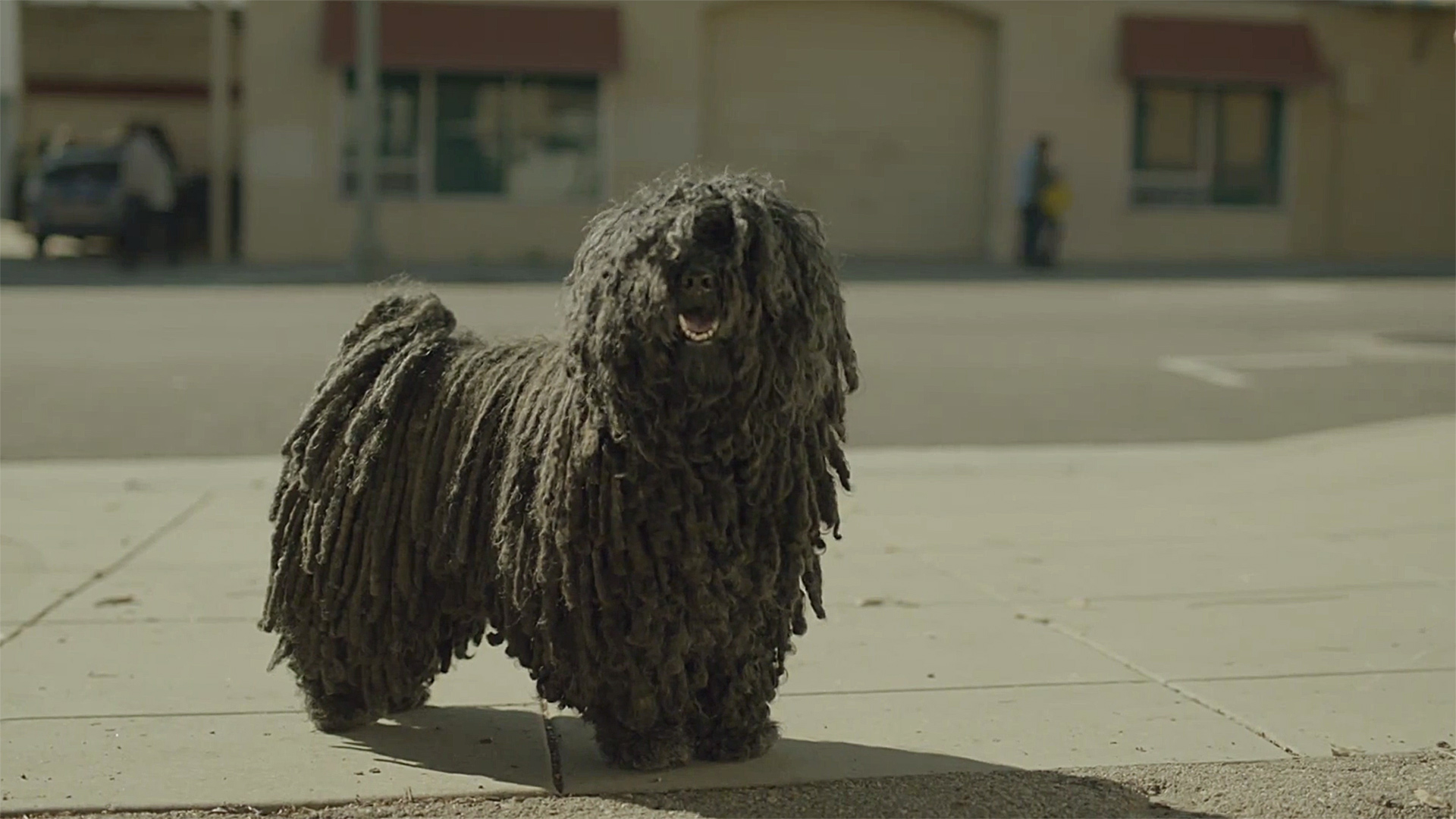 This mop dog should probably star in every commercial from now on