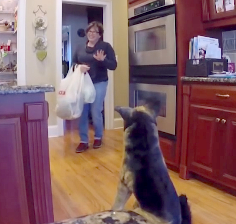 This mom gets pranked 5 times in 3 minutes by the same stuffed dog