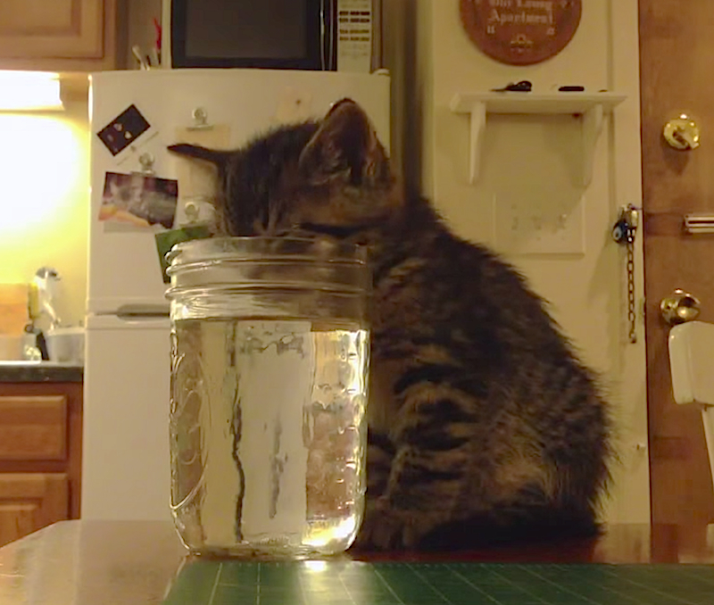 Cuteness Break: Sleepy kitten is too tired to drink & too thirsty to give up
