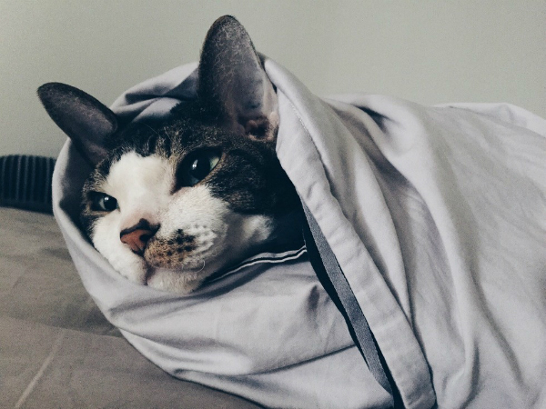 Cats who are winning winter by becoming a 'purrito'