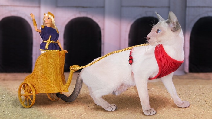 A Kickstarter for a 3-D cat chariot exists, because god bless the Internet