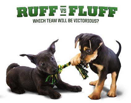It's almost Puppy Bowl day! Meet the cutest contenders. . .