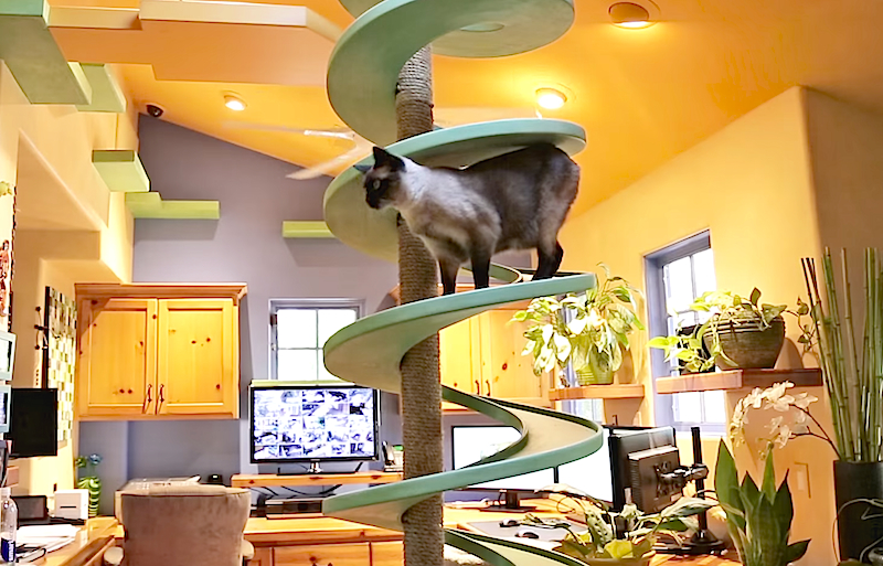 Man turns his home into a baller 'cat play land', and it's pretty impressive