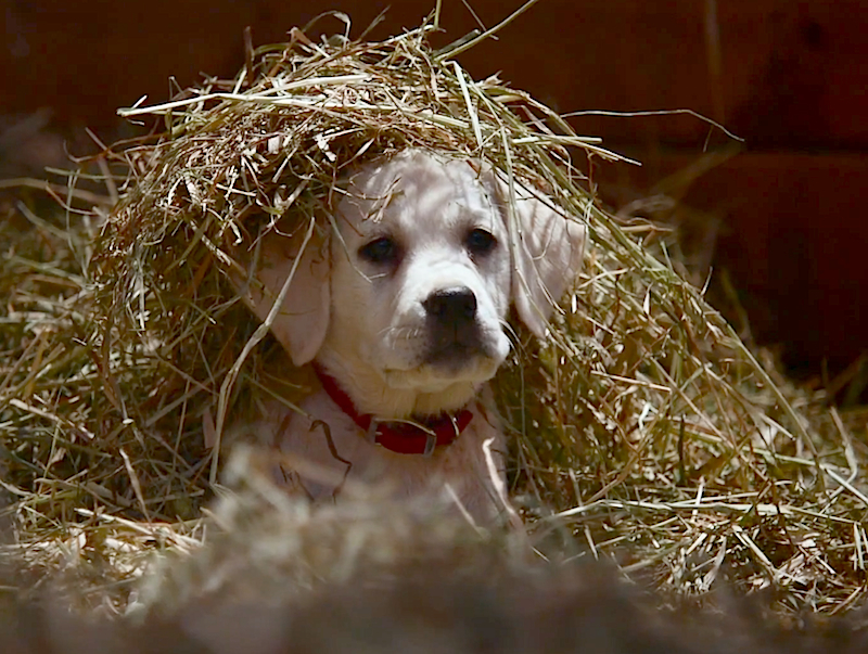 Heartsplosion: Budweiser's Super Bowl ad will make you happy cry forever