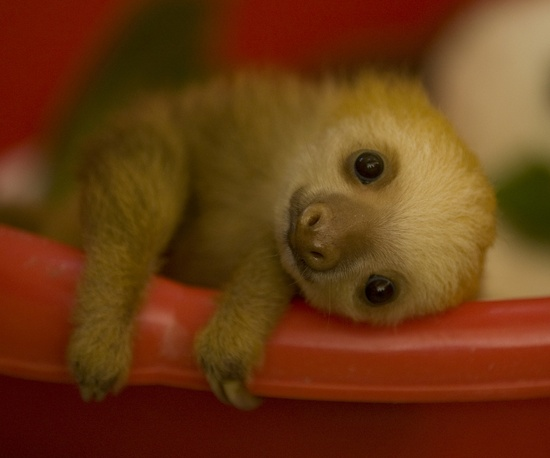 Cuteness Explosion: Sloth magic is a real and beautiful thing!