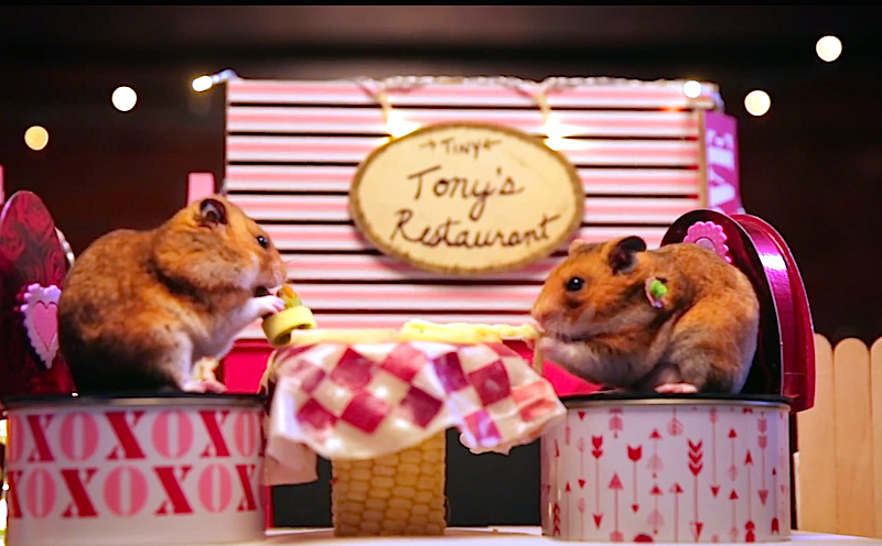 This tiny hamster's tiny date will make you believe in love
