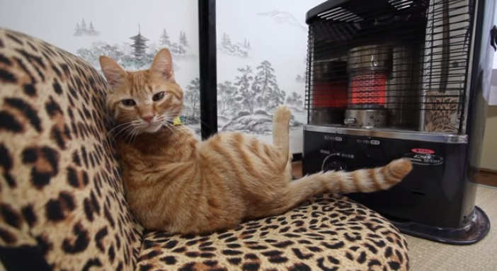 This tabby cat on a leopard sofa, in front of a heater, is our spirit animal