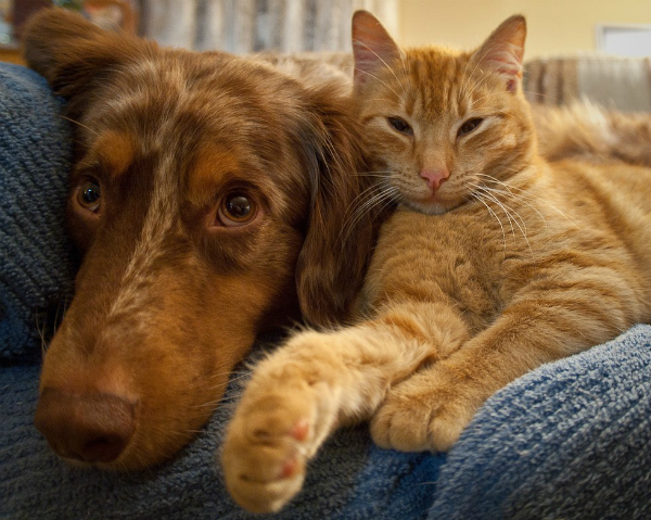 Cats and dogs who look like they could be siblings
