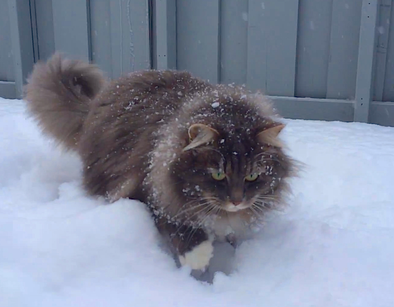 No cat loves a snow day more than Nala, watch her go wild!