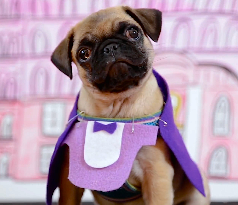 Adorable pug puppy recreates the Oscar 'Best Picture' nominees