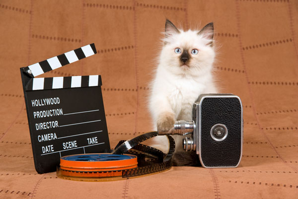 Cats get their own film festival, and TBH, it's about time