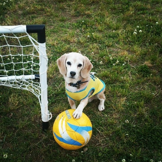 We want this dog on our soccer team immediately