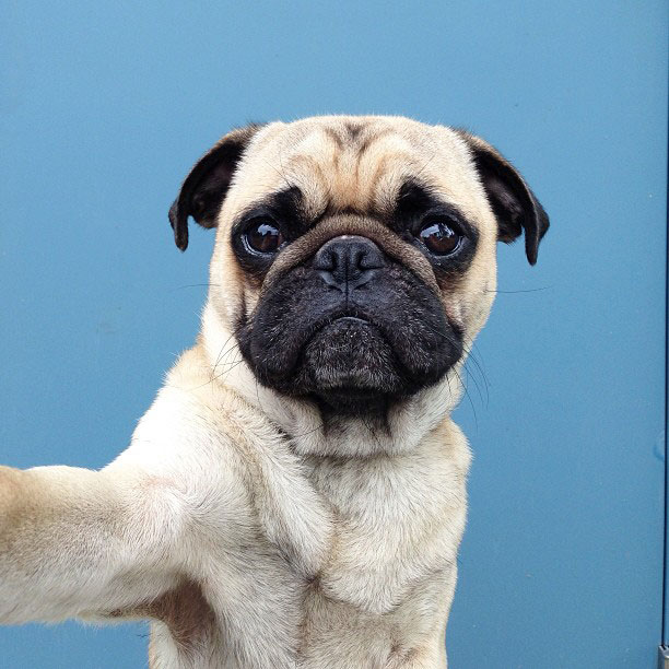 Life lessons I've learned from my pug (yes, my pug)