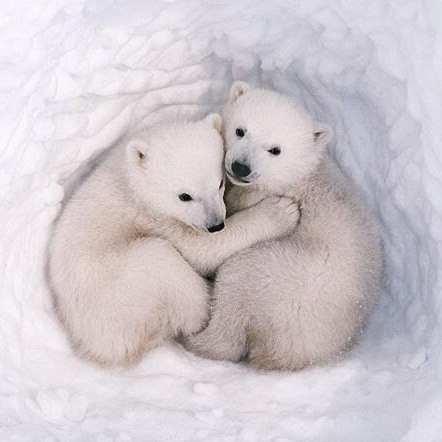 It's International Polar Bear Day, so let's raise awareness (and stare at gorg gifs) in their honor