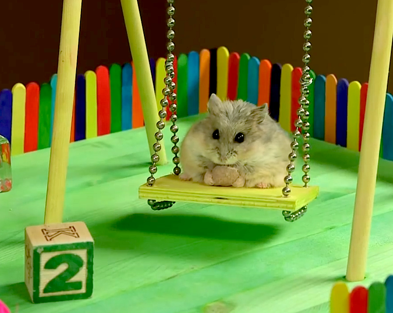Watching a tiny hamster playing in a tiny playground will bring you huge amounts of joy!