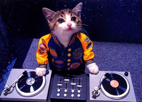 Cats dig music too, just not your music. Here's what's on their playlist.