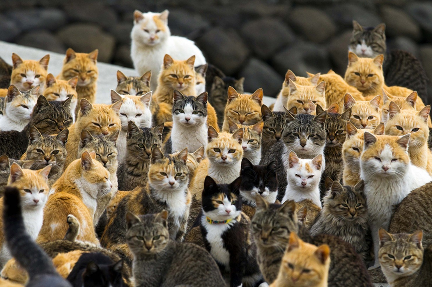 There's a place known as Cat Island, and it's exactly what it sounds like
