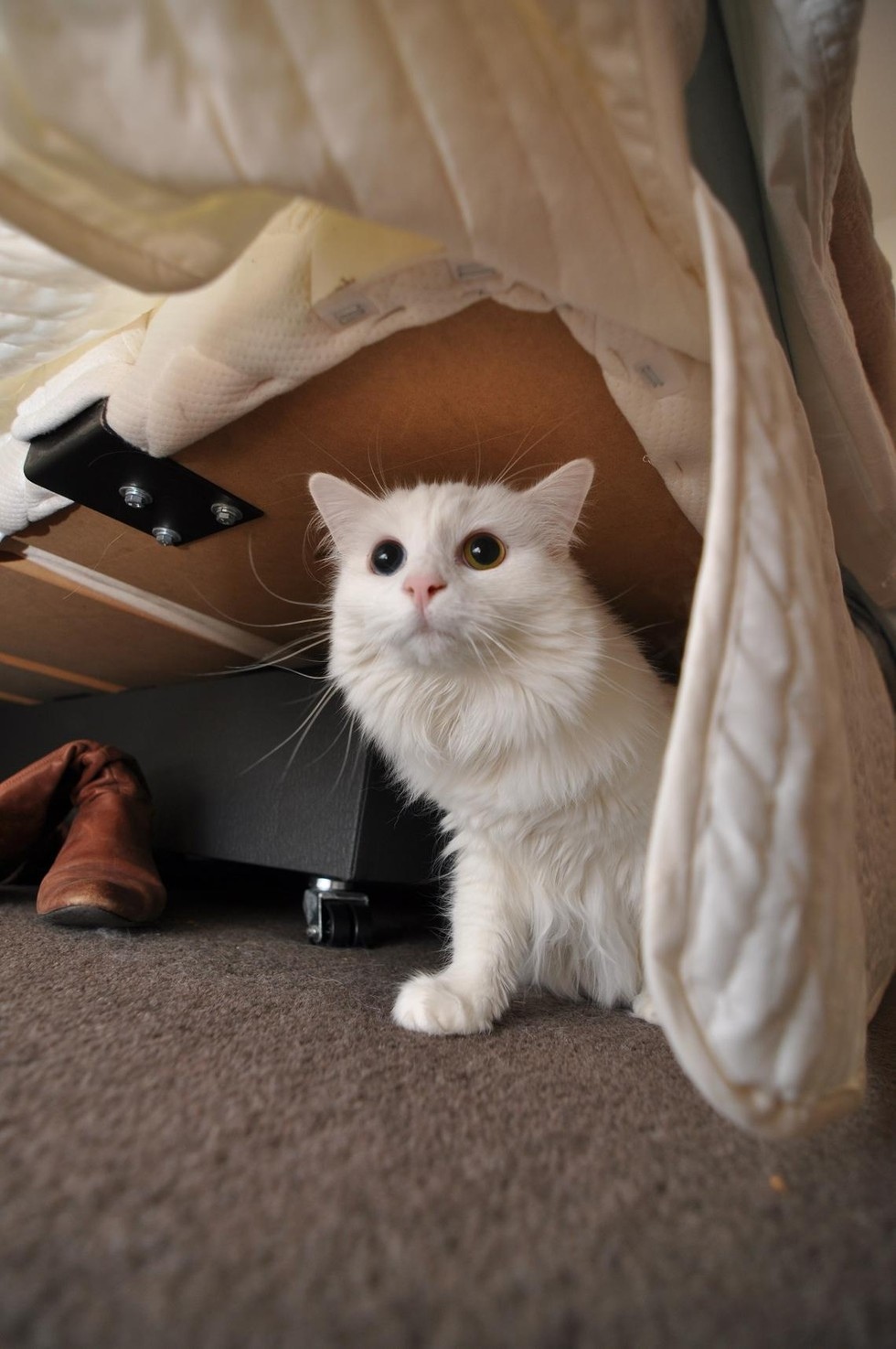 Pets who are hiding from the dreaded vacuum