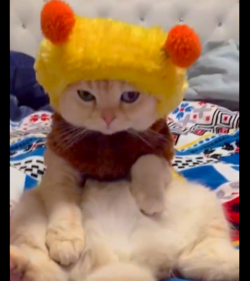 Cuteness Break: Super chill cat wearing a bee costume gets caught watching TV in bed