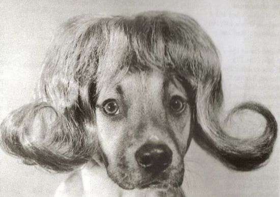 Don't worry, we've found some dogs in wigs to start your day off right