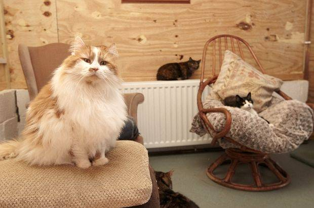 This cat retirement home is filling our hearts with love