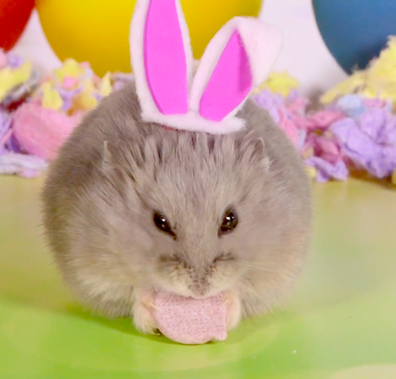 Someone dressed up these tiny hamsters a threw them a tiny Easter party!