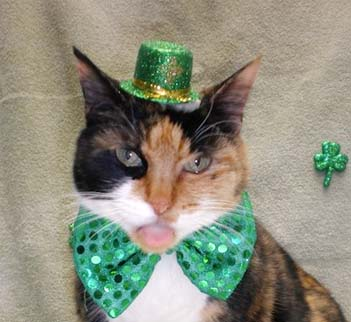 Animals who dress better on St. Paddy's Day than anyone else we've ever met