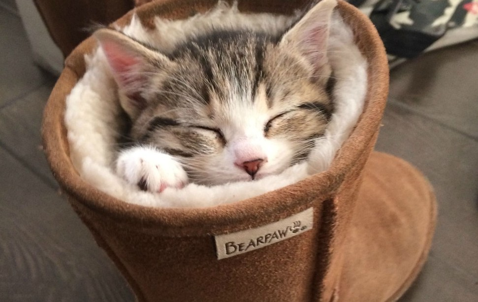 17 pets who have a serious shoe obsession