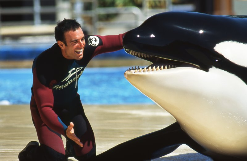 On our reading list: The book by SeaWorld's former Orca trainer