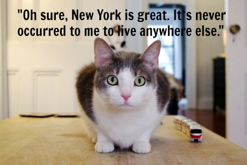Felines of New York is our favorite Humans of New York parody