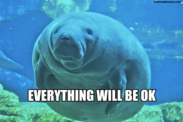 Don't worry, these manatees will make everything better