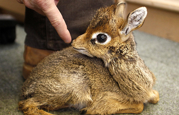 The cutest animals you never knew existed