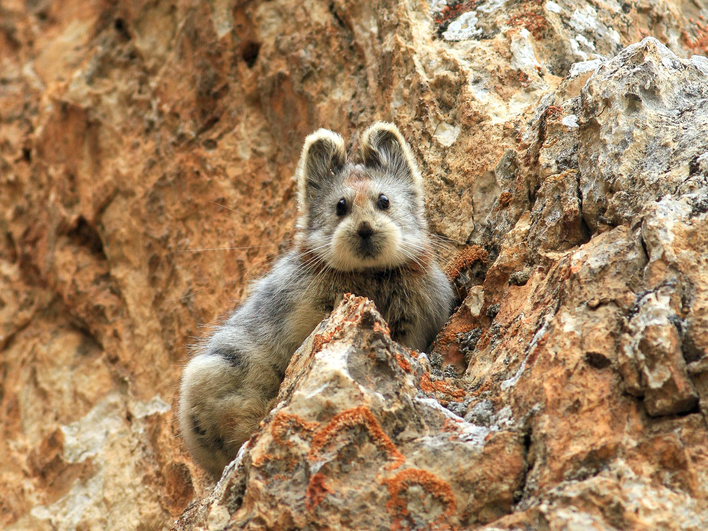 New favorite animal alert! Is there anything cuter than this teddy-bear-faced little guy?