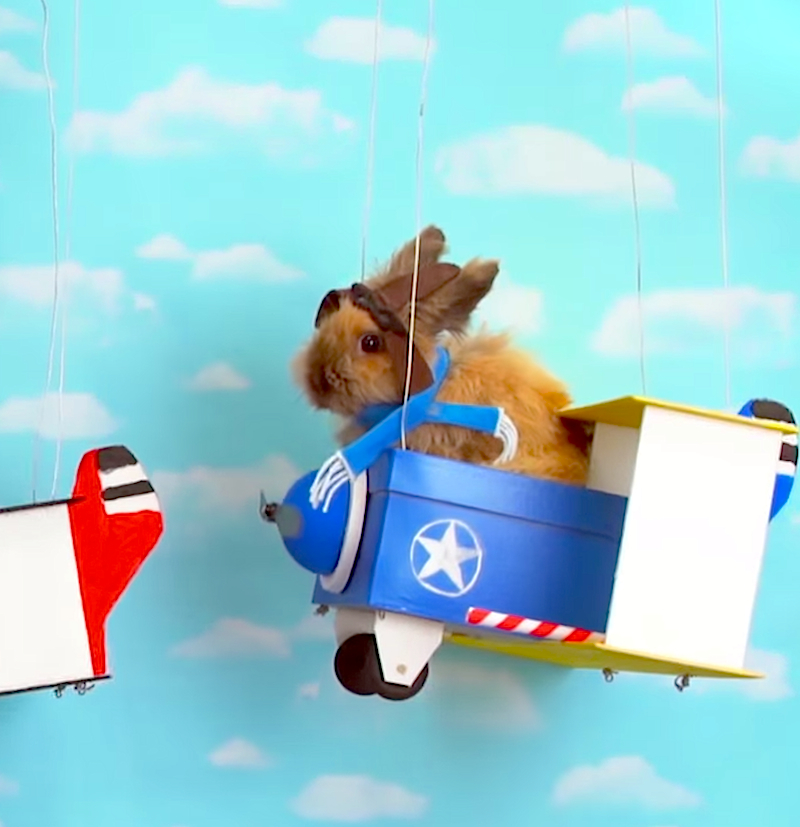 Meet the fuzzy bunny with dreams of being a tiny fighter pilot