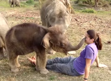 The amazing story behind that viral baby elephant video