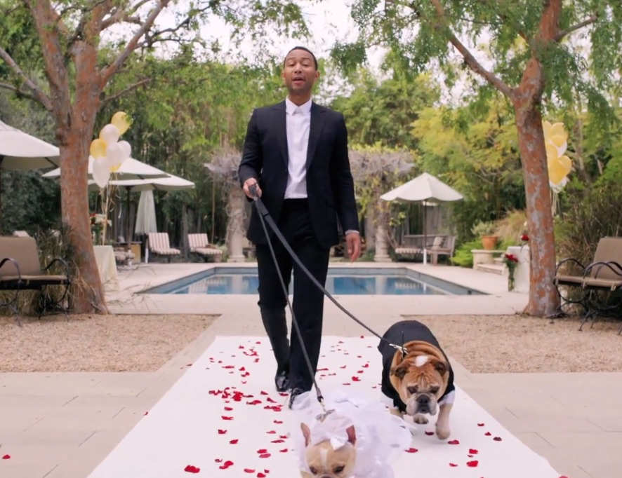 John Legend serenading his dogs at their wedding is all the swoons