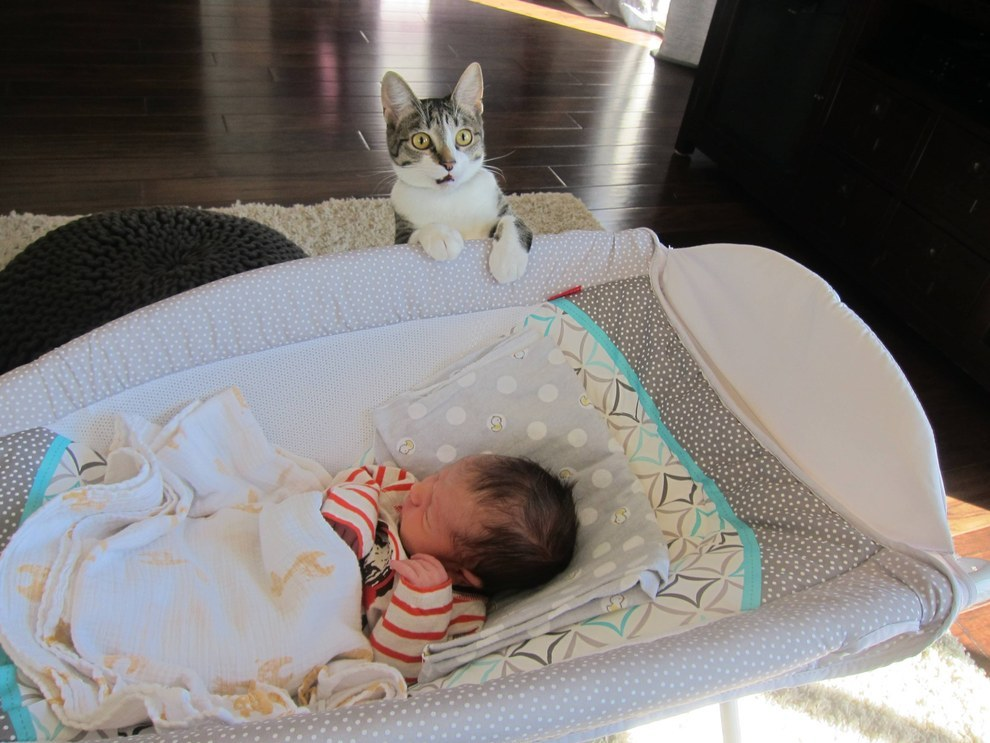What happens when you forget to tell your cat you had a baby