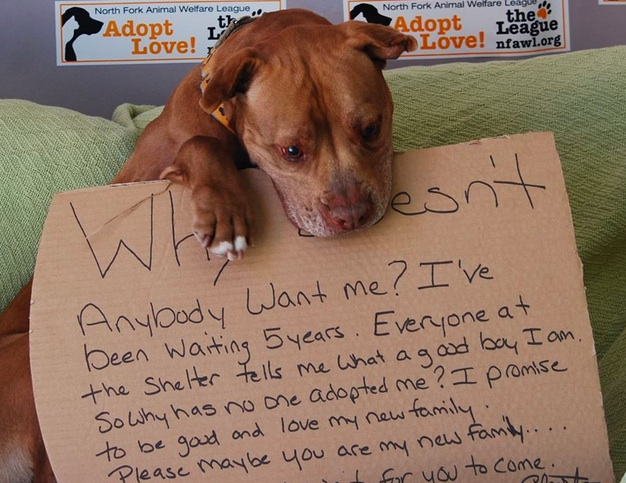 Facebook changed this dog's life in the absolute best way possible