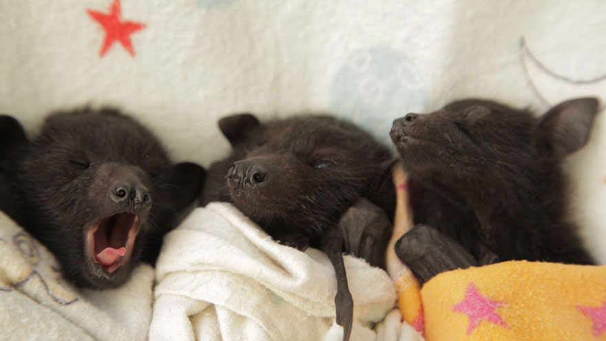 Didn't know we'd love baby bats so much, but hey