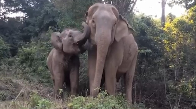 We're happy-crying over this mama elephant and her baby reuniting