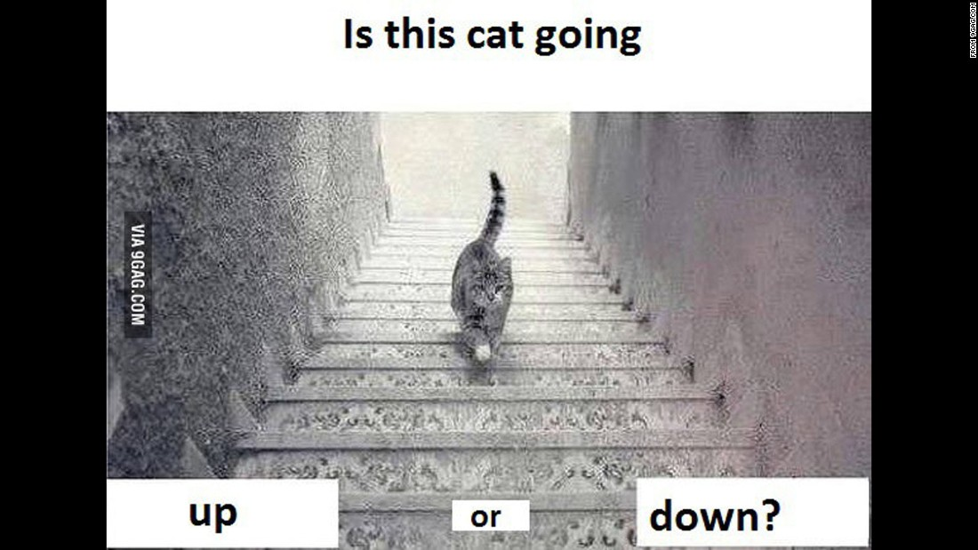 Up Or Down? This picture of a cat is the new #thedress
