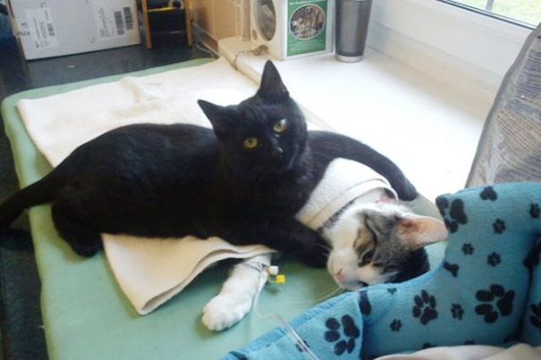 This nursing cat gives us all the feels in the world