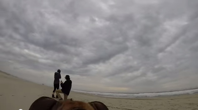 Here's what your marriage proposal looks like to your dog