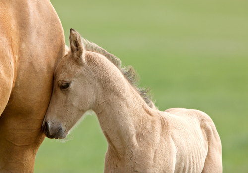 This baby horse cuddling is definitely the cutest thing you'll see today