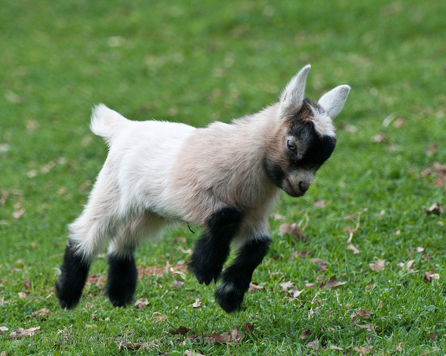 You can officially rent goats on Amazon, because of course you can