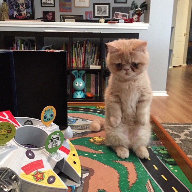 Meet George, the cat who likes to stand on two legs. NBD.